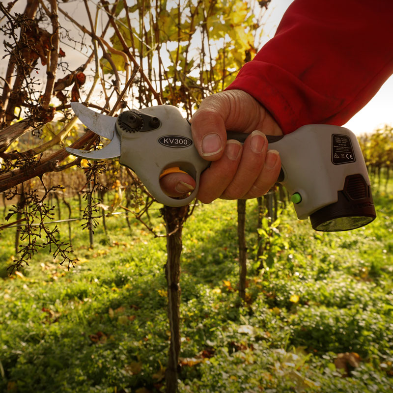 Akkuschere Weinbau / elektrische Gartenschere